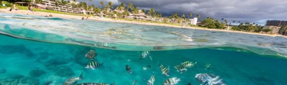 MauiSheratonfish